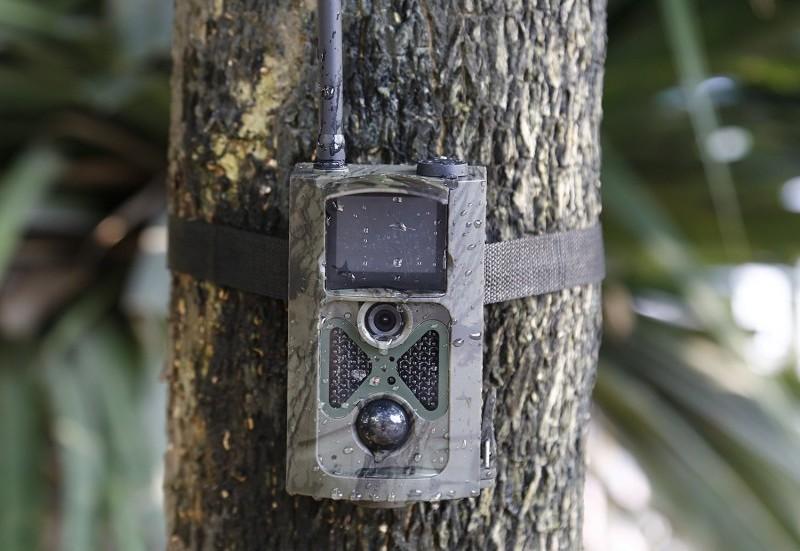 Les pièges photographiques sont-ils efficaces ?